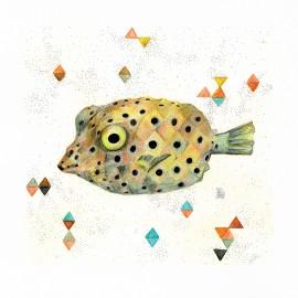 Peix cofre