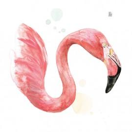 Cap de flamenc
