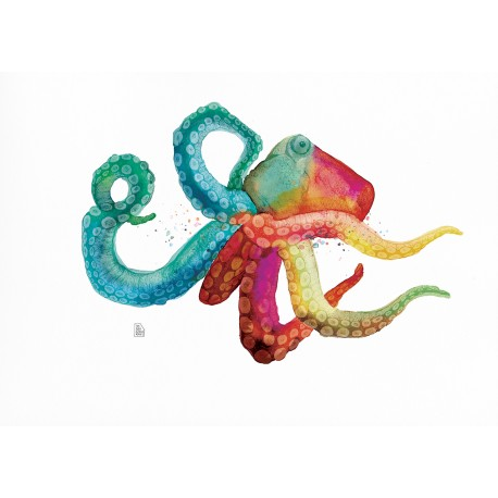Color octopus