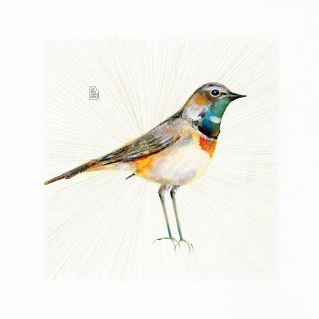 Ocell nou