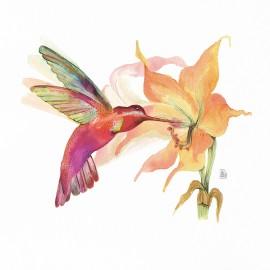 Hummingbird (flor taronja)