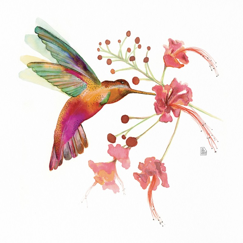 Hummingbird Love (compound Flower)