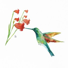 Hummingbird Love (bell flowers)