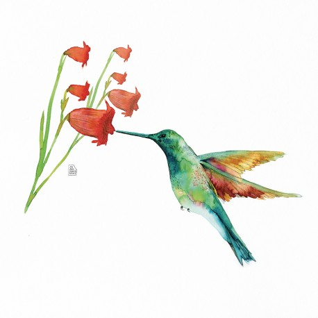Hummingbird Love (flor campanes)