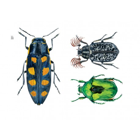 Three Cockroaches