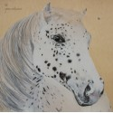 Horse with freckles