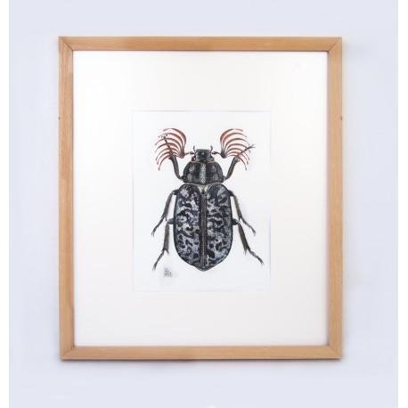 Escarabat bataner