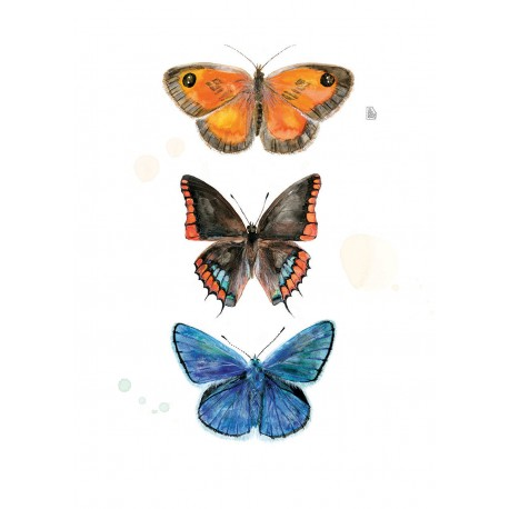 3 papallones