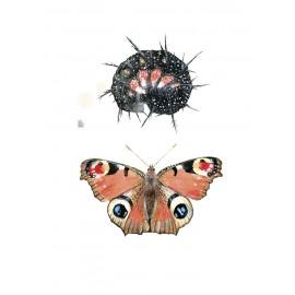 Oruga i papallona