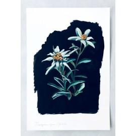 Flor de neu