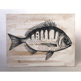 Sarda fish