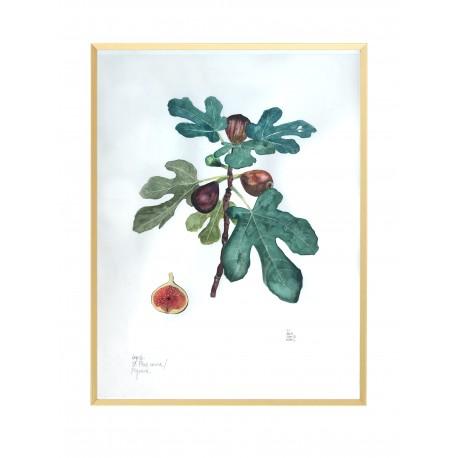 Fig Tree Original Oak