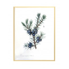 Framed Original  Juniper