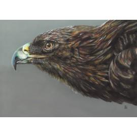 Roc bird